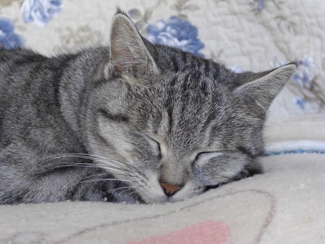 20090101_cat_1.jpg
