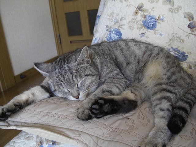 20090101_cat_2.jpg